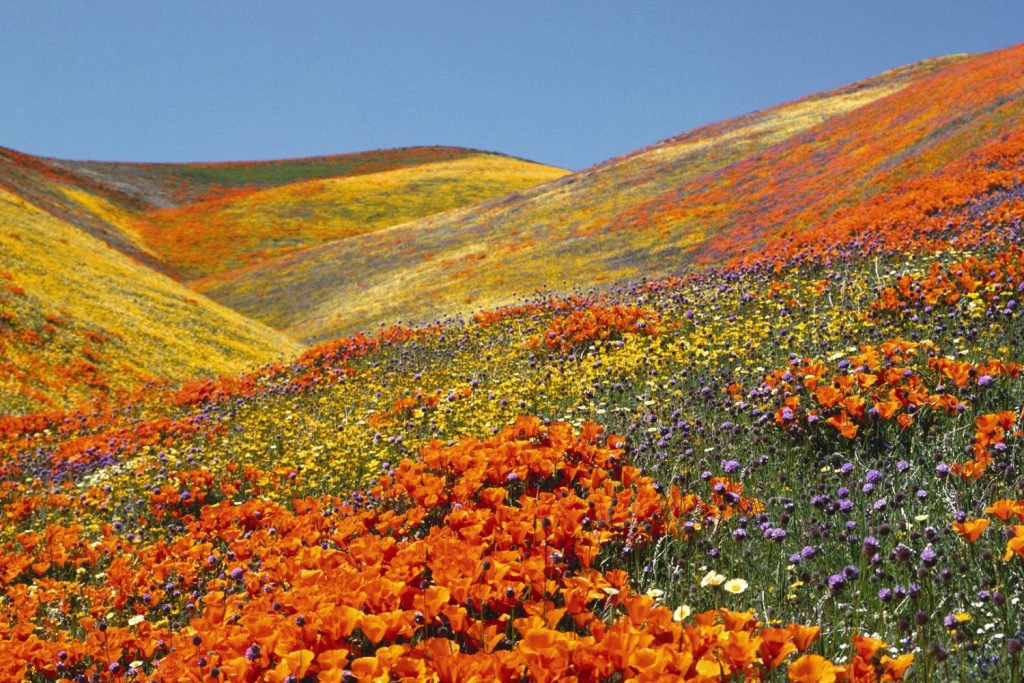 The beautiful colors of the Valley of Flowers in Uttaranchal.