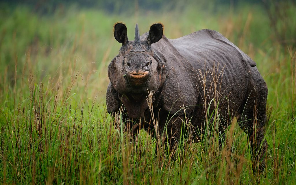 The best rhino viewpoint in Kaziranga National Park