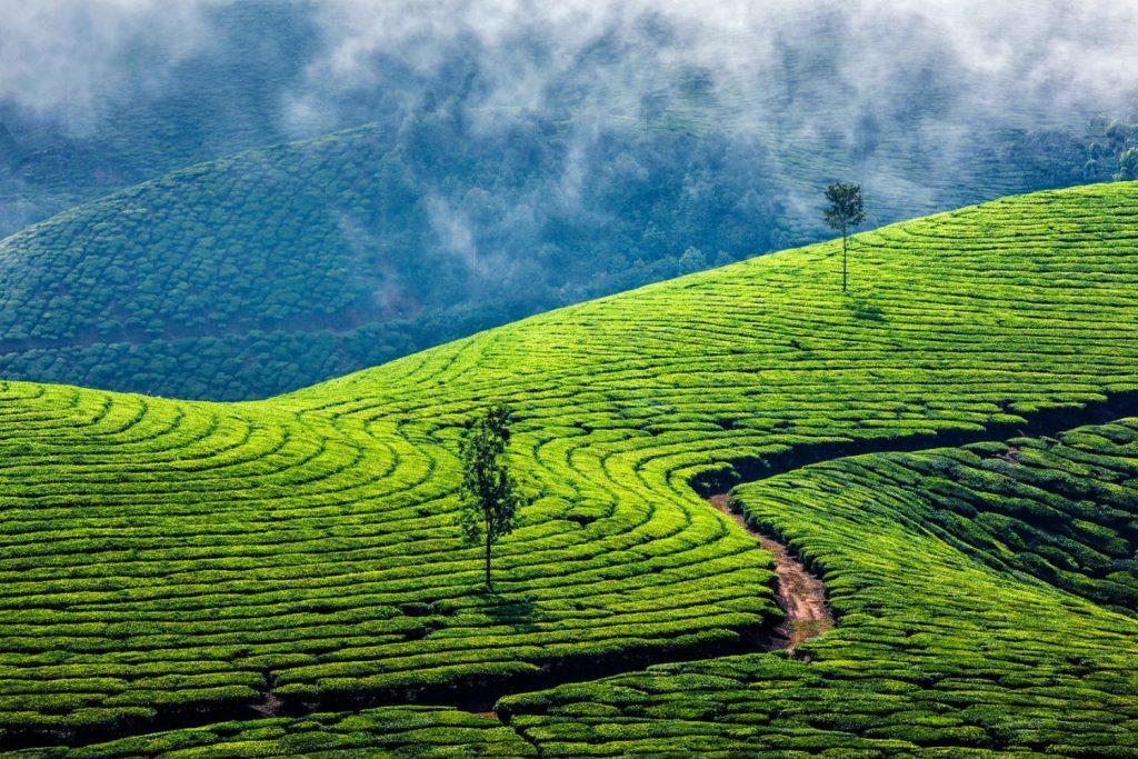 Las plantaciones de Nuwara Eliya en Sri Lanka es una gran atracción