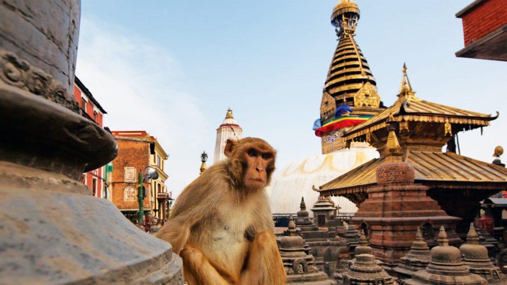 Mono mirando a la cámara en la estupa de Swayambhunath en Katmandú