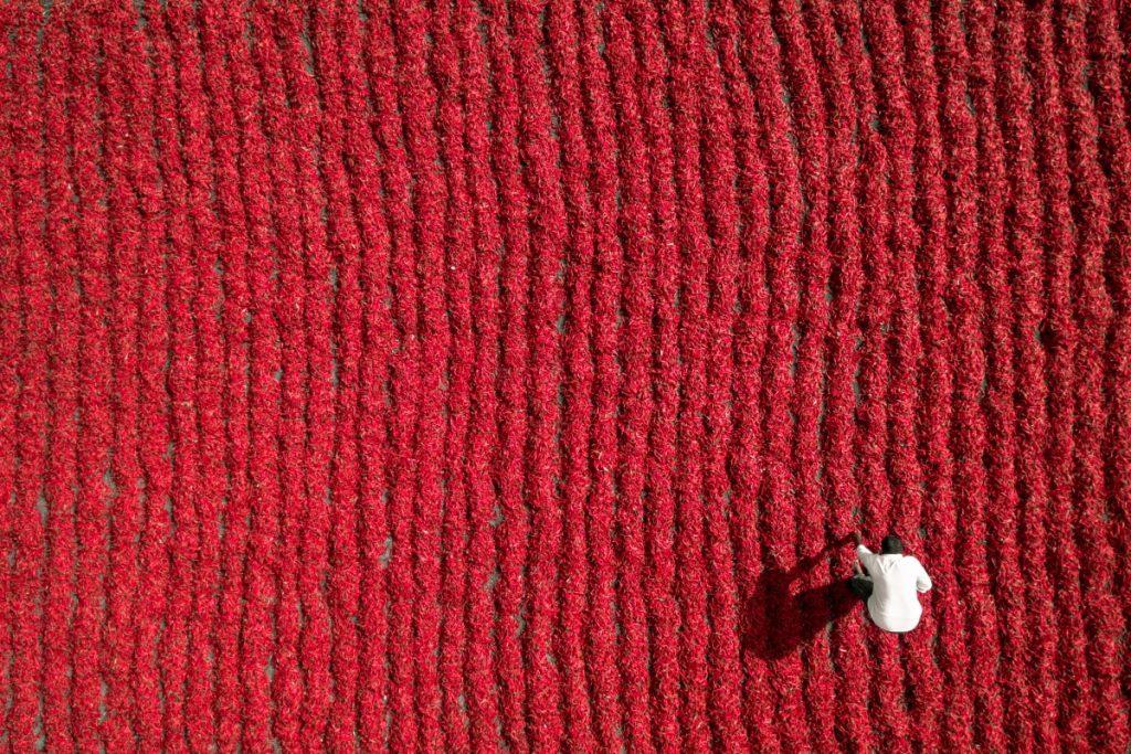 Agricultor en campo de chiles en Andhra Pradesh