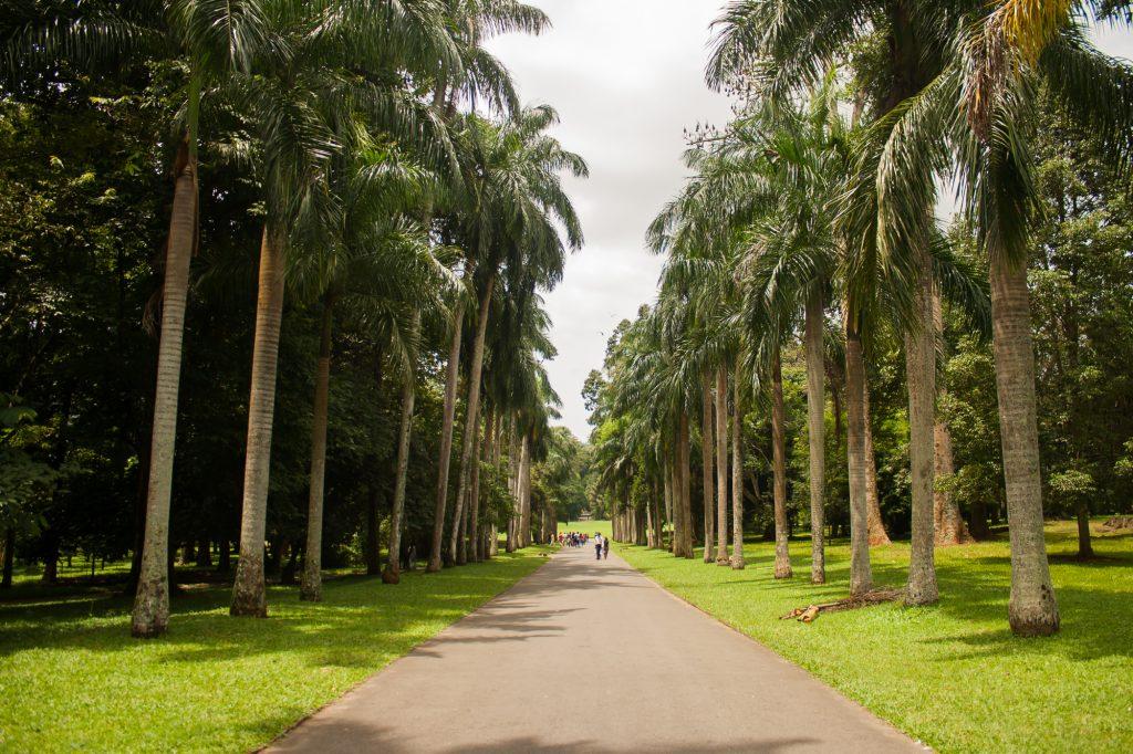 Naturaleza en el Jardín Botánico de Kandy en Sri Lanka