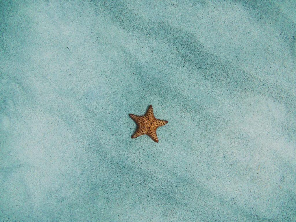 Estrella de mar en Maldivas