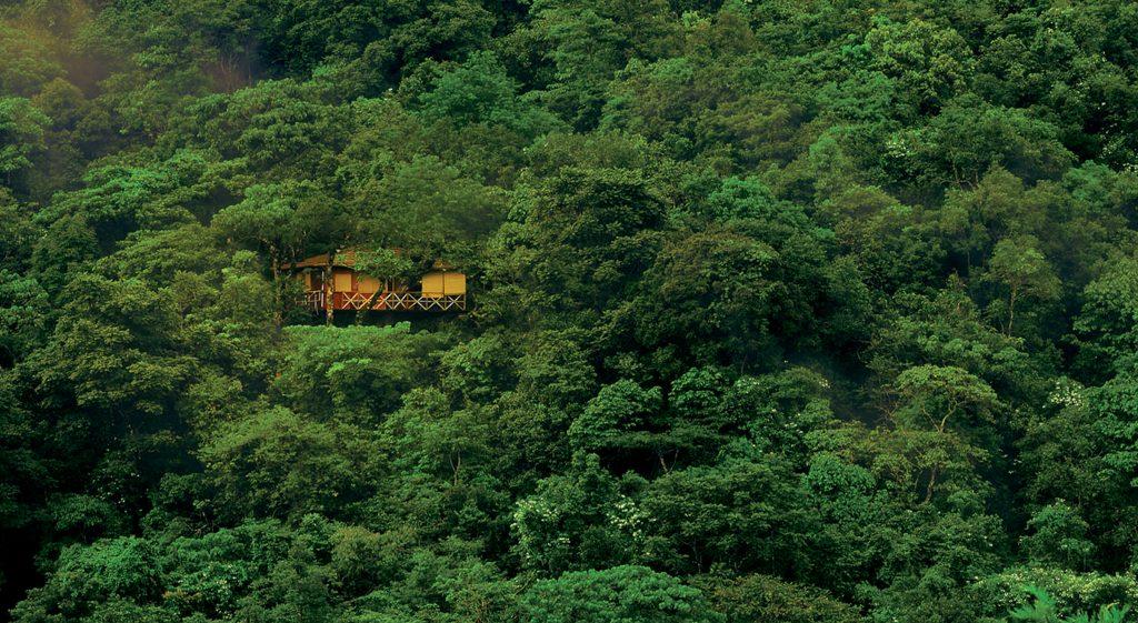 Cabaña de hotel árbol en la selva de Kerala