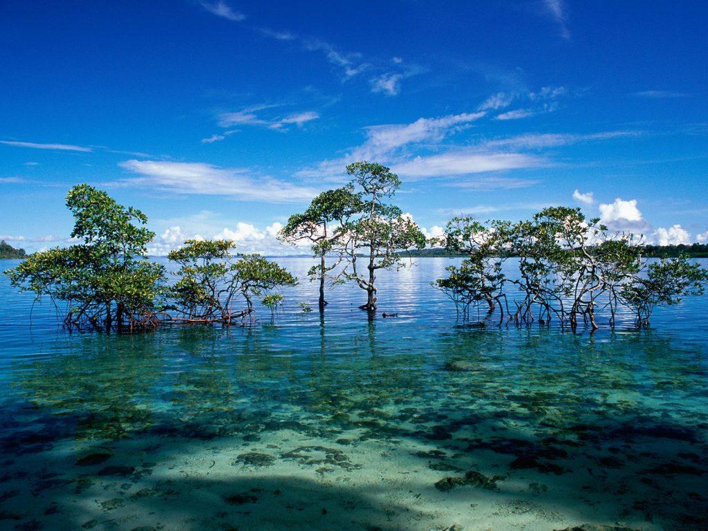 Árboles en el mar en las islas Andamán