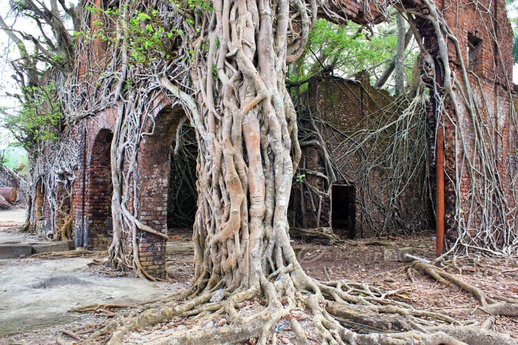 Ruinas coloniales en Ross Island en las islas Andamán