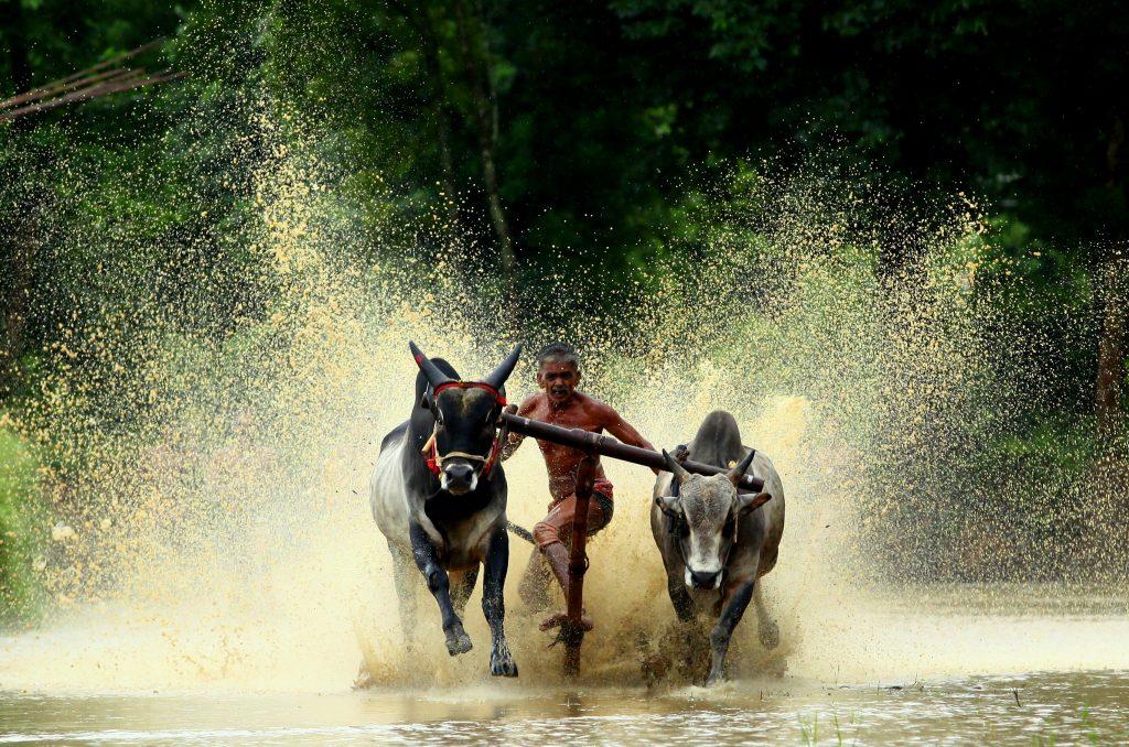 Cosas que solo verás en India y bull surfing