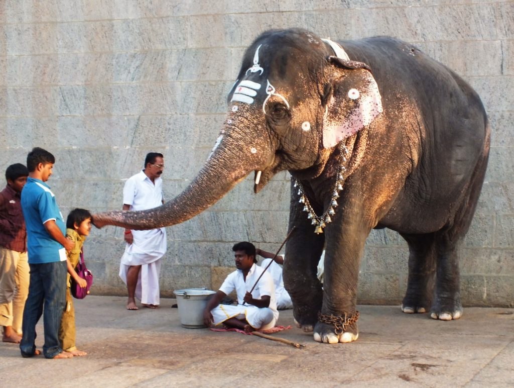Elephant in Madurai Temple