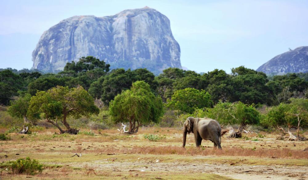 Yala es el sexto mejor parque nacional para National Geographic