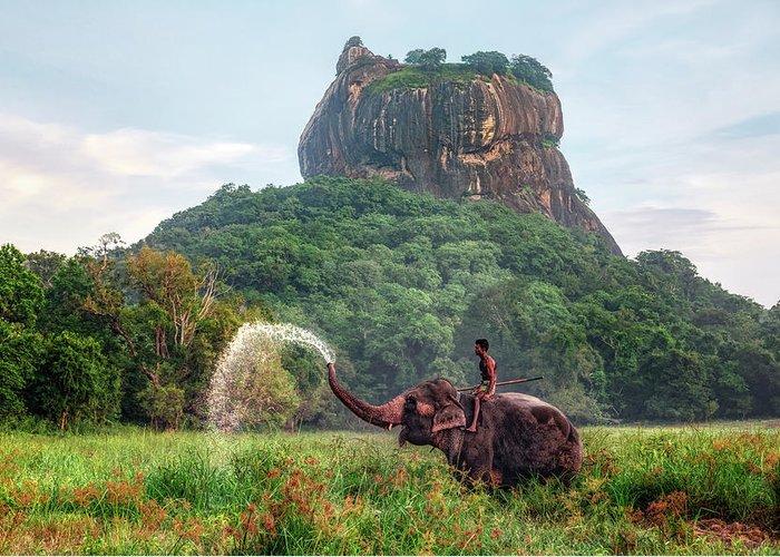 Elefante junto a Sigiriya.