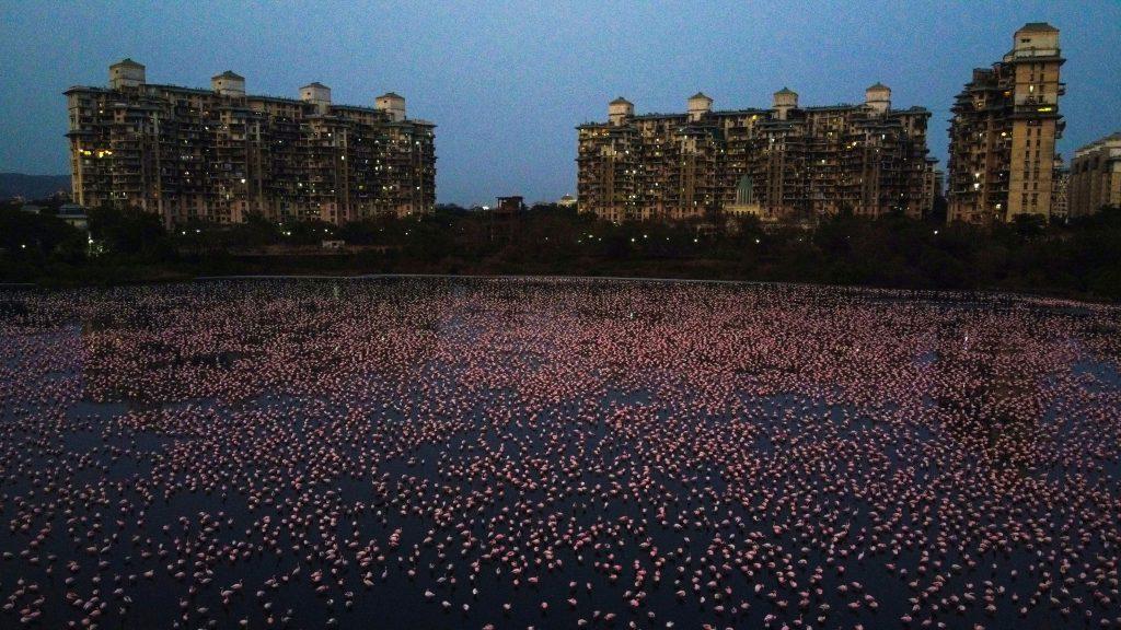 Naturaleza en Mumbai