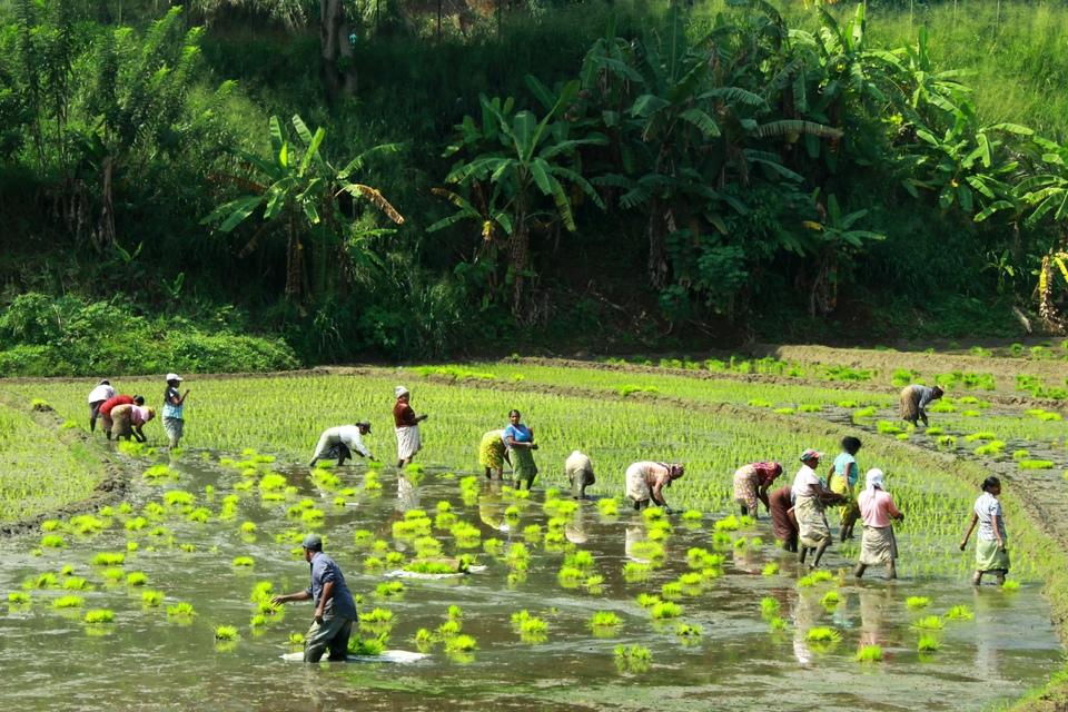 Desarrollo de la Sri Lanka rural