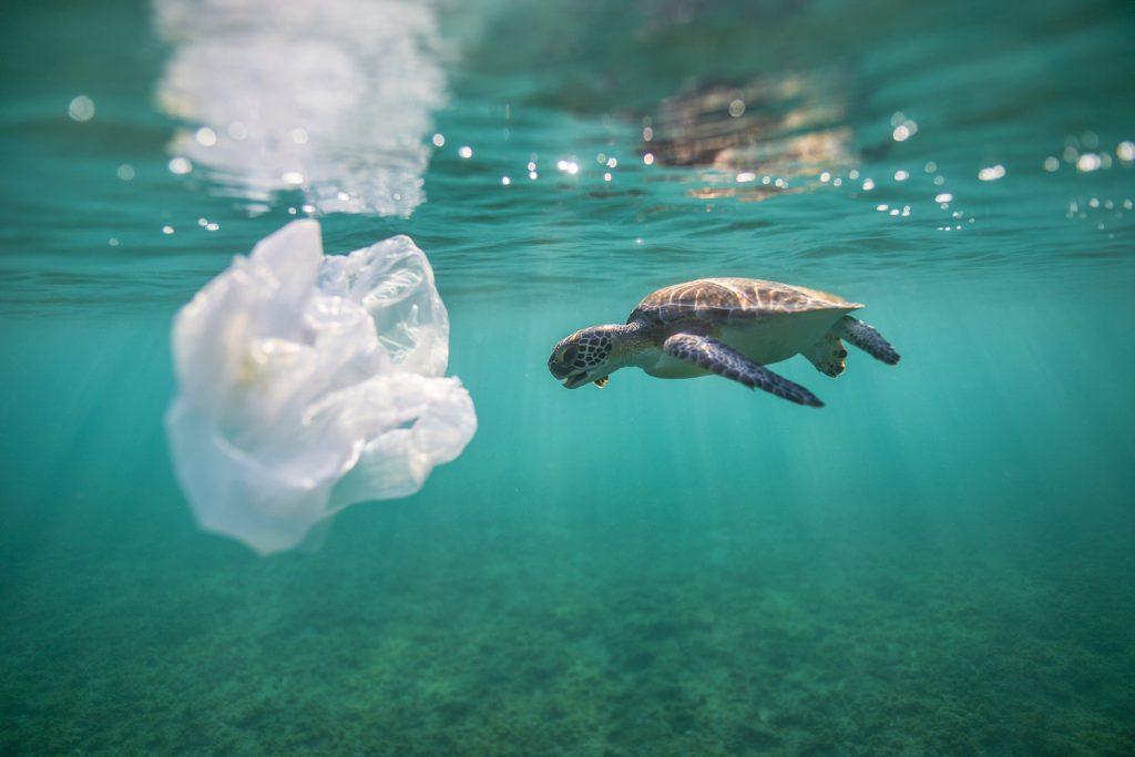 Plástico es malo para las tortugas