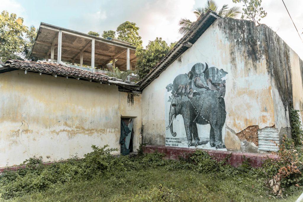 Denuncia del maltrato de elefantes