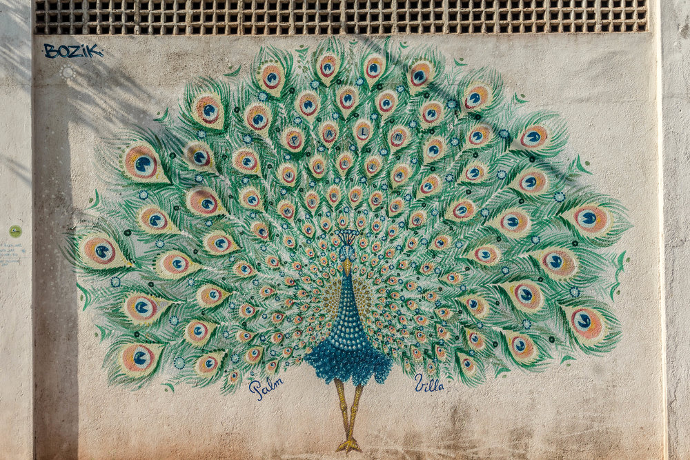 Graffiti de pavo real en Sri Lanka