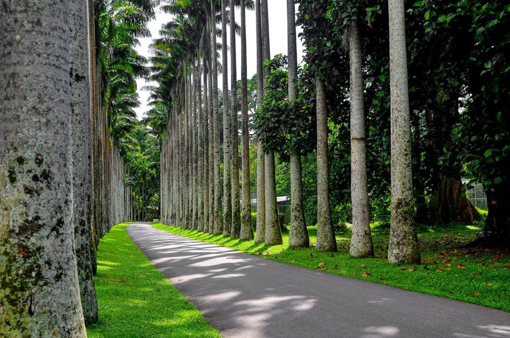 Jardines botánicos de Kandy