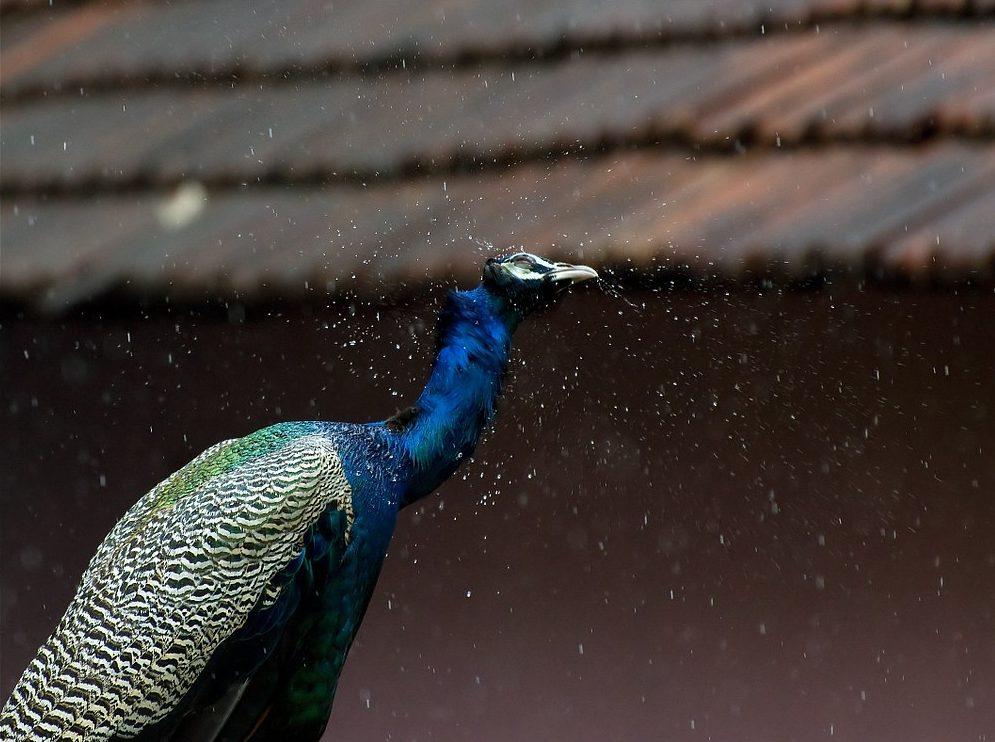 vivir el monzón en India