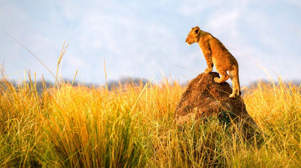 Es mejor un safari en África o un safari en India